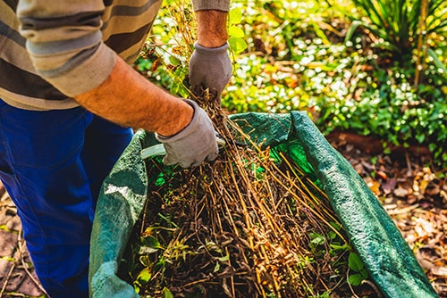 https://peninsulacanada.com/wp-content/uploads/2021/08/Protect-outdoor-workers-from-hazardous-plants.jpg